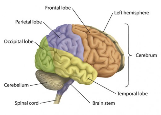 Reading In The Brain  Part Two