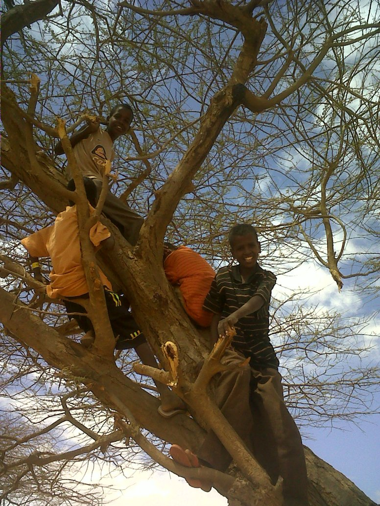 Children_climbing_a_tree_in_the_Dadaab_refugee_camp,_north-east_Kenya_(5942667619)